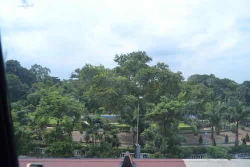 importance of planting saplings